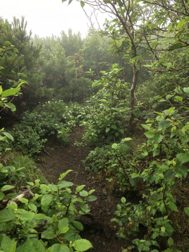 石狩岳登り 2